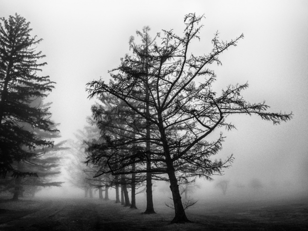 """""""Reaching in the Fog"""" by Laure Dunne"""