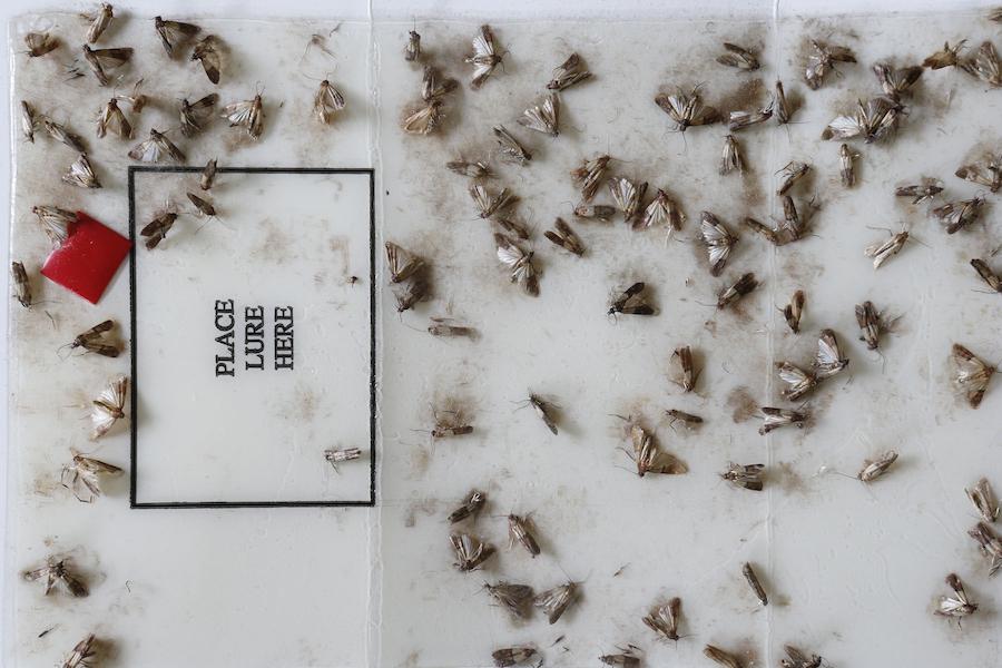 Pantry Pests by Ben Larabee